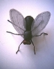 2001 - La mosca